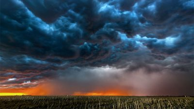 Photo of dark blue storm clouds over a corn flied during the day